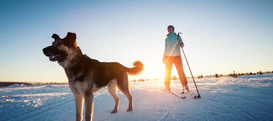 A Guide to Cross-Country Skiing with Your Dog